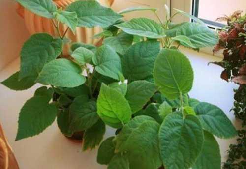 выращивание дыни в открытом грунте в домашних условиях: технология и уход