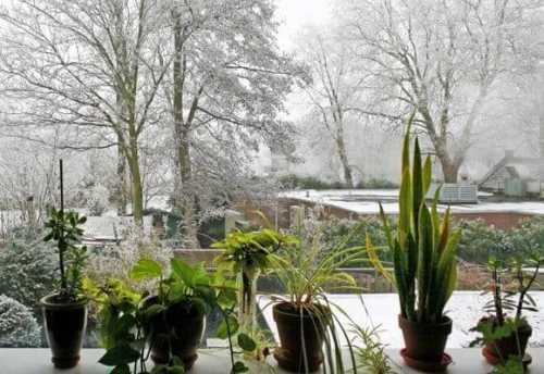 сад на подоконнике как помочь растениям пережить зиму